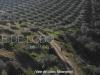 vale_de_lobo_1