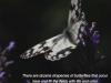 metulj_1
