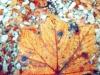 limani_sumbul_listje_v_jeseni